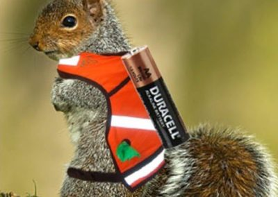 Squirrels: A New Form of Renewable Energy?